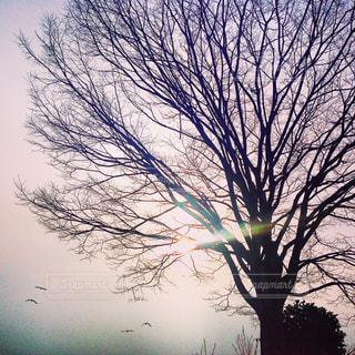 幻想的な空、飛び立つ鳥の写真・画像素材[822593]
