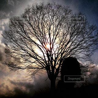木の後ろに幻想的な空の写真・画像素材[822594]
