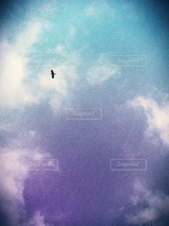 空を飛んでいる鳥の写真・画像素材[824842]