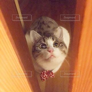 入りたい猫の写真・画像素材[1027222]