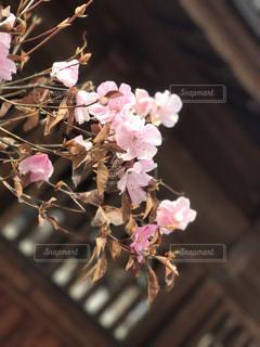 春の写真・画像素材[448189]