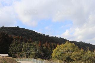 背景の山と木の写真・画像素材[999915]