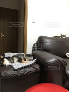 犬の写真・画像素材[329383]