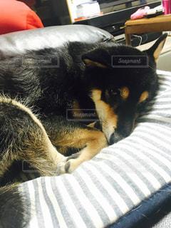 犬の写真・画像素材[329432]