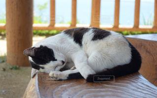 猫の写真・画像素材[484000]