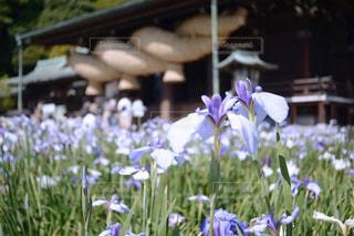 花の写真・画像素材[521287]