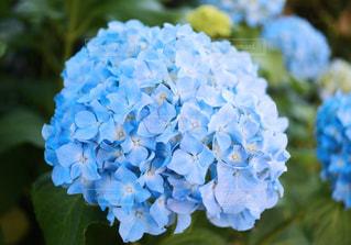 花の写真・画像素材[521288]