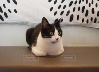 猫の写真・画像素材[584696]