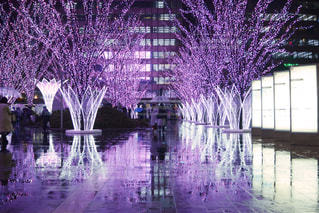 リフレクション桜イルミの写真・画像素材[1030403]