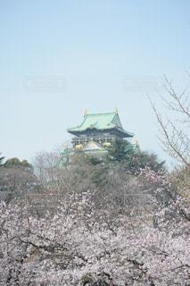 大阪城on桜の写真・画像素材[1088901]