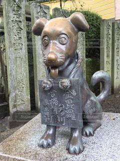 犬の写真・画像素材[329606]