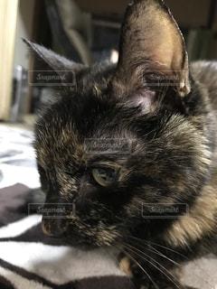 猫の写真・画像素材[330431]