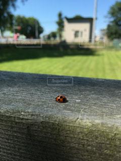 夏の写真・画像素材[330556]