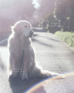 犬の写真・画像素材[330647]