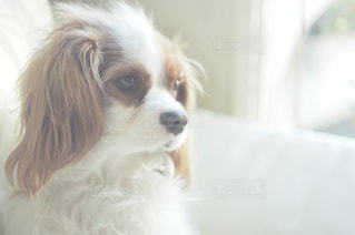 犬 - No.330648