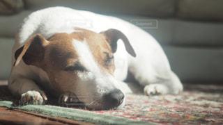 犬 - No.330649