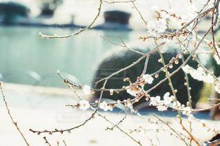 春 - No.330651
