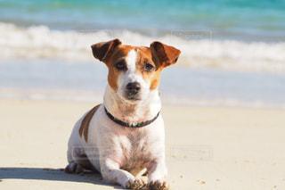 犬 - No.330659