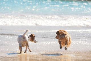 犬の写真・画像素材[330677]