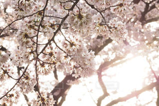 春 - No.330678