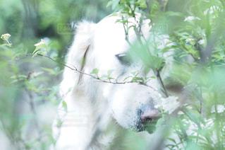 犬の写真・画像素材[330679]