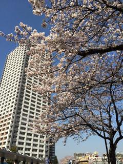 春の写真・画像素材[330738]