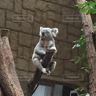 動物の写真・画像素材[333122]