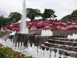 公園の写真・画像素材[335007]