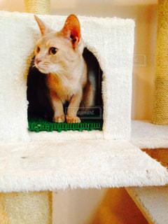猫の写真・画像素材[333064]