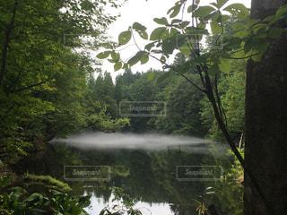 木々 に囲まれた湖の景色の写真・画像素材[1160709]