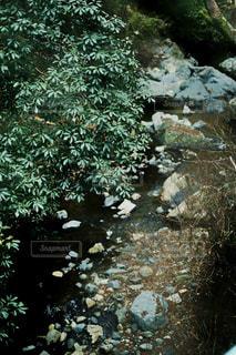 近くの木のアップの写真・画像素材[1785127]