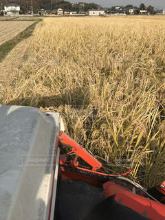 農業の写真・画像素材[334110]