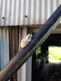 カエルの写真・画像素材[335184]
