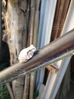 カエルの写真・画像素材[335187]