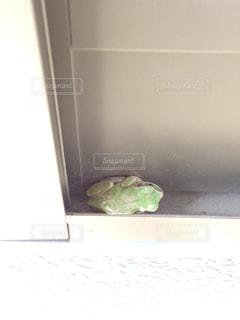 カエルの写真・画像素材[340665]