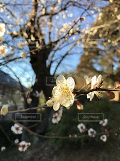 花の写真・画像素材[332108]