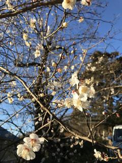 花の写真・画像素材[332111]