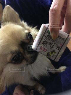 犬の写真・画像素材[333472]