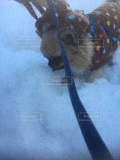 犬の写真・画像素材[334349]