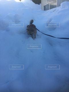 犬の写真・画像素材[334352]