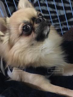 犬の写真・画像素材[334396]
