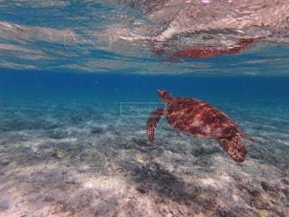 海の写真・画像素材[331515]