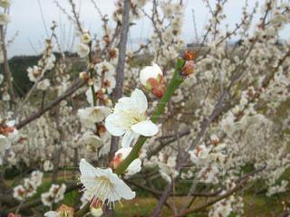 花の写真・画像素材[338212]