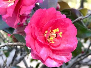 花の写真・画像素材[347092]