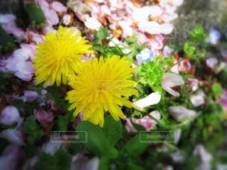 花の写真・画像素材[376376]