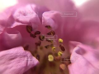 花の写真・画像素材[378731]