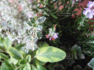 花の写真・画像素材[381320]