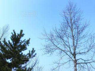 自然の写真・画像素材[393607]