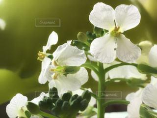 花の写真・画像素材[416399]