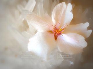 花の写真・画像素材[431715]
